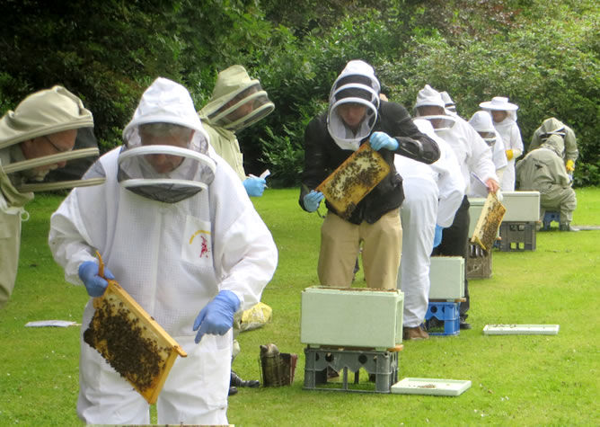 Gormanston beekeeping Summer School 2019