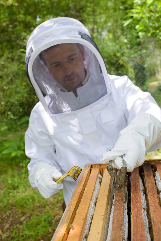Beekeeper Learning to Handle Bees