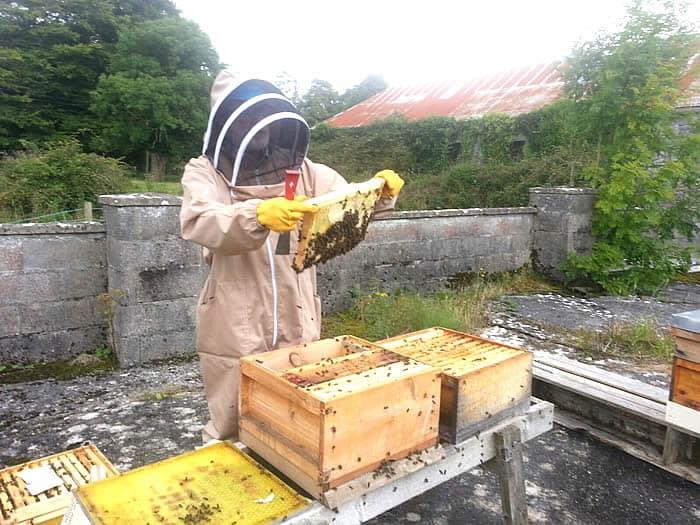Beginners Beekeeping Class