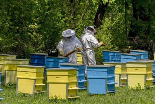 Beekeepers Inspecting Hives - Beekeeping Supplies